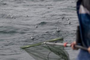Zeevogelringer Wouter in actie