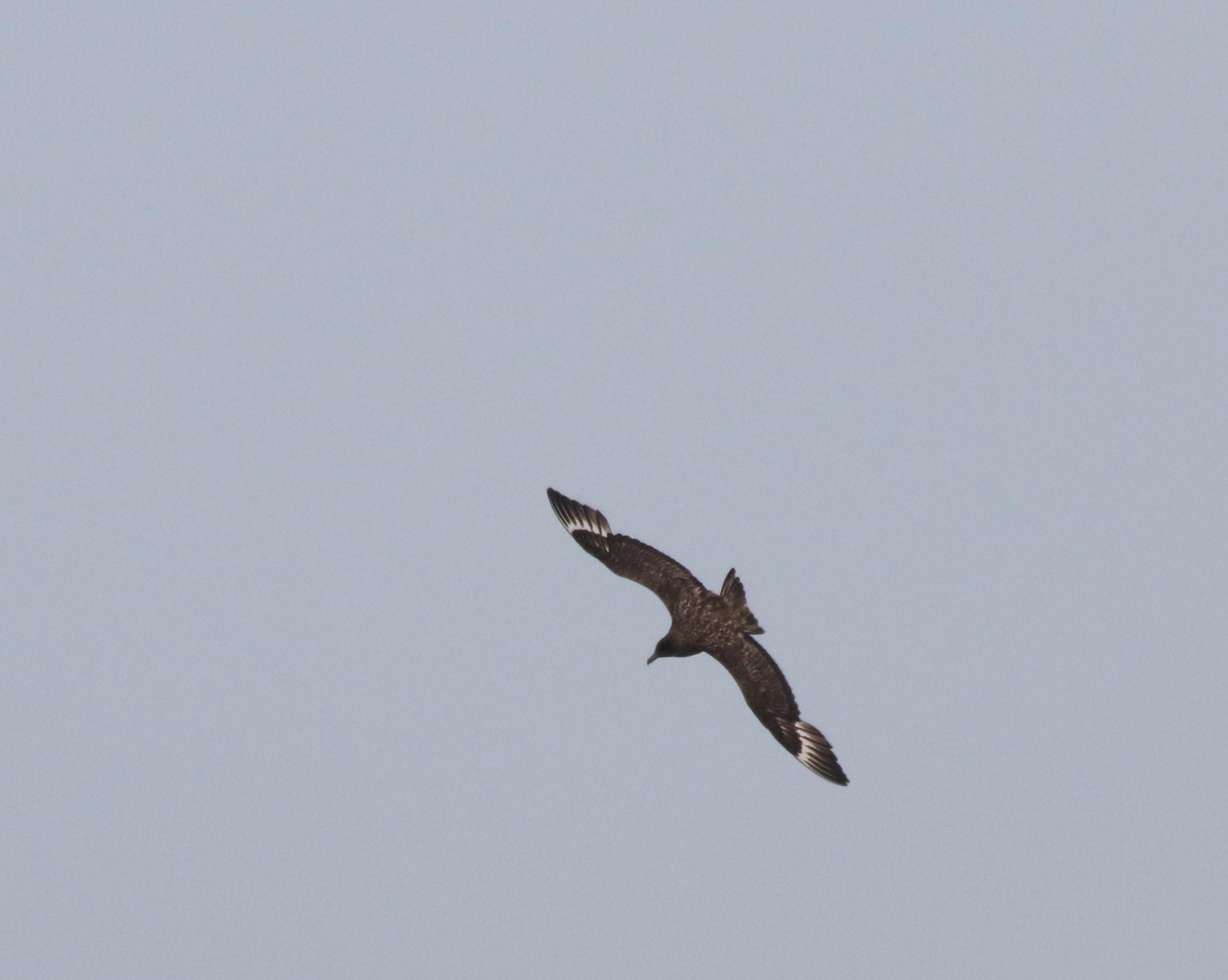 Grote Jager (foto: Hans Limper)